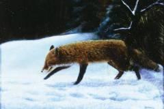 Winterfuchs1