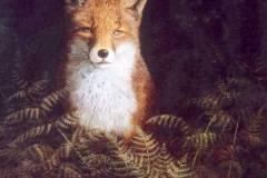 Fuchs im Farn